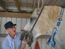 Big Mack sees the equine dentist